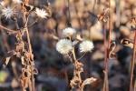 Sun Reflects Plant